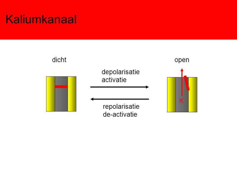 Kaliumkanaal dicht open depolarisatie activatie K repolarisatie