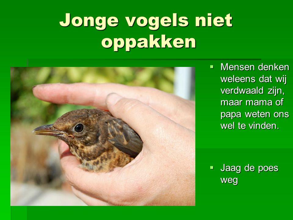 Jonge vogels niet oppakken