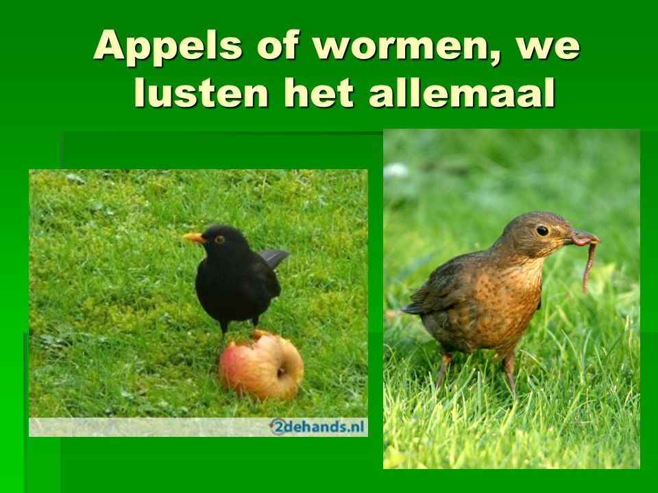 Appels of wormen, we lusten het allemaal