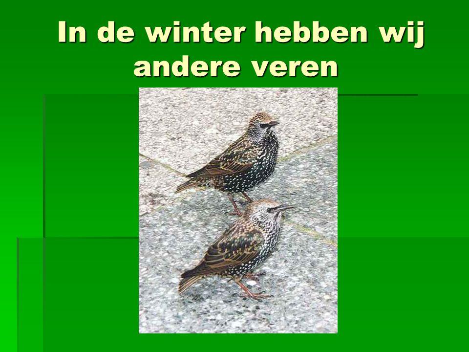 In de winter hebben wij andere veren