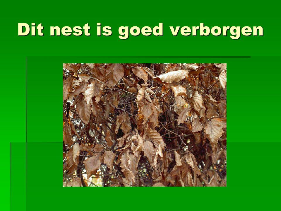 Dit nest is goed verborgen