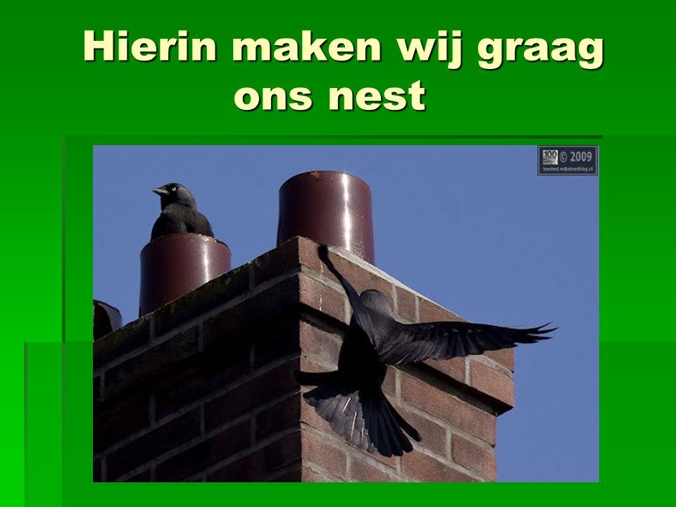 Hierin maken wij graag ons nest