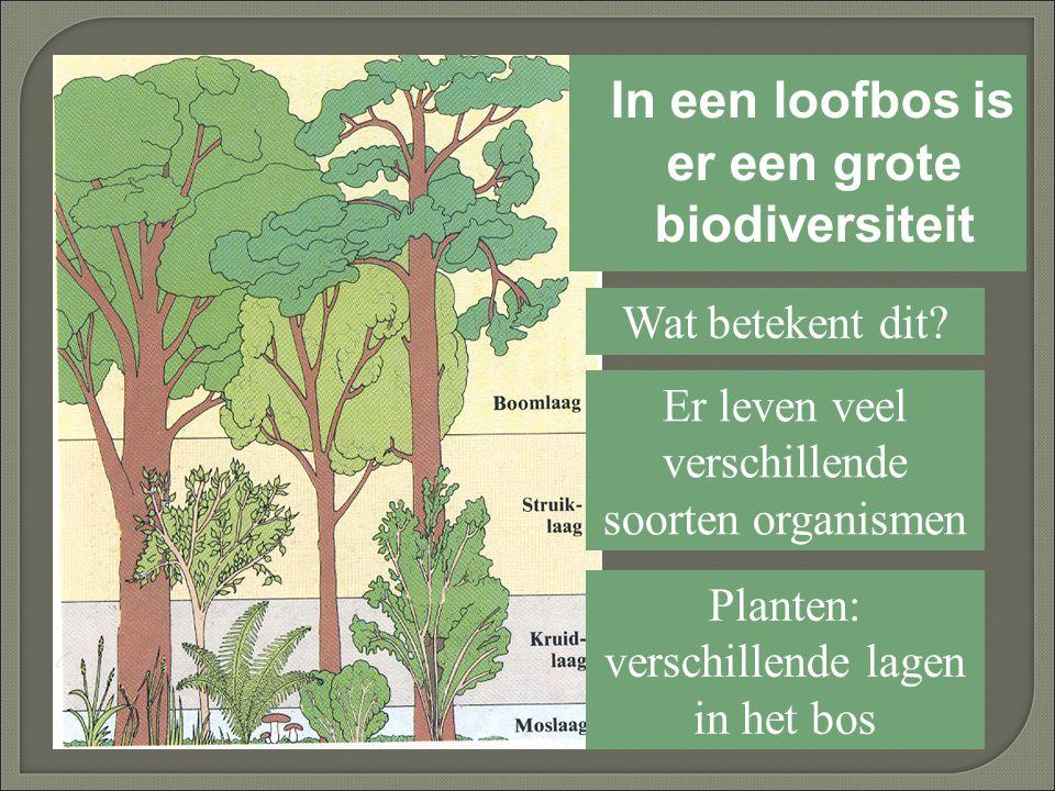 In een loofbos is er een grote biodiversiteit
