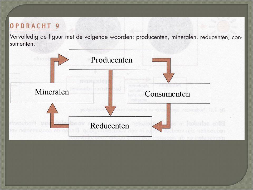 Producenten Consumenten Reducenten Mineralen