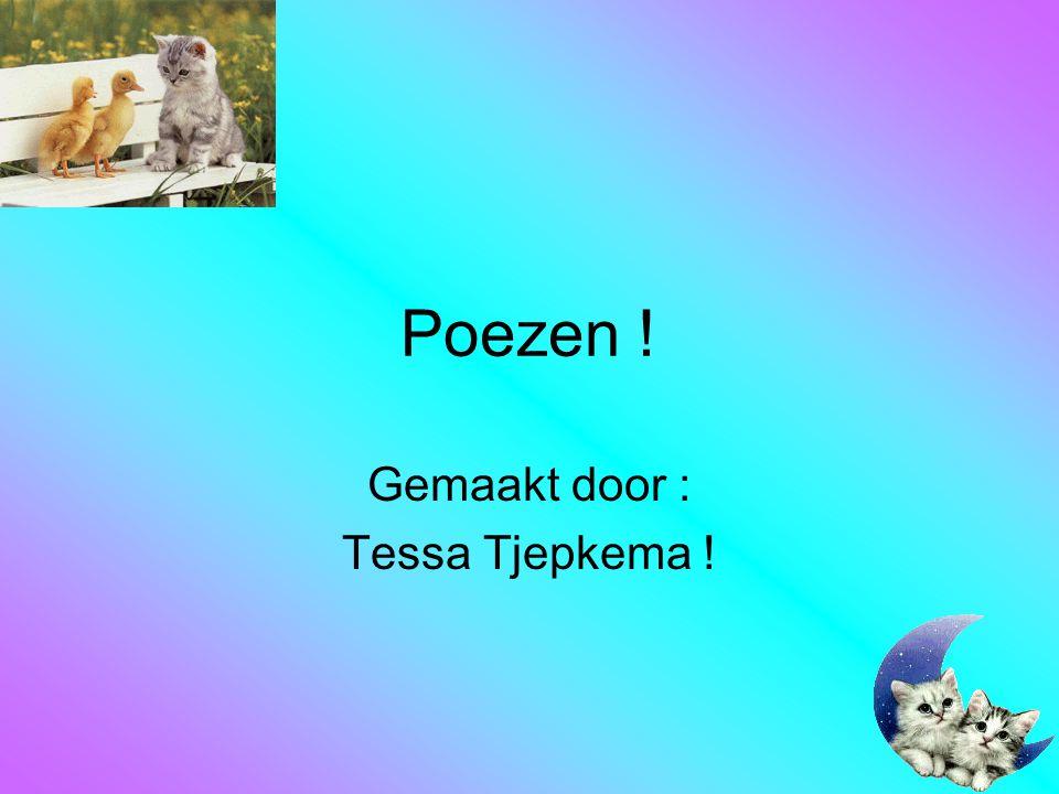 Gemaakt door : Tessa Tjepkema !