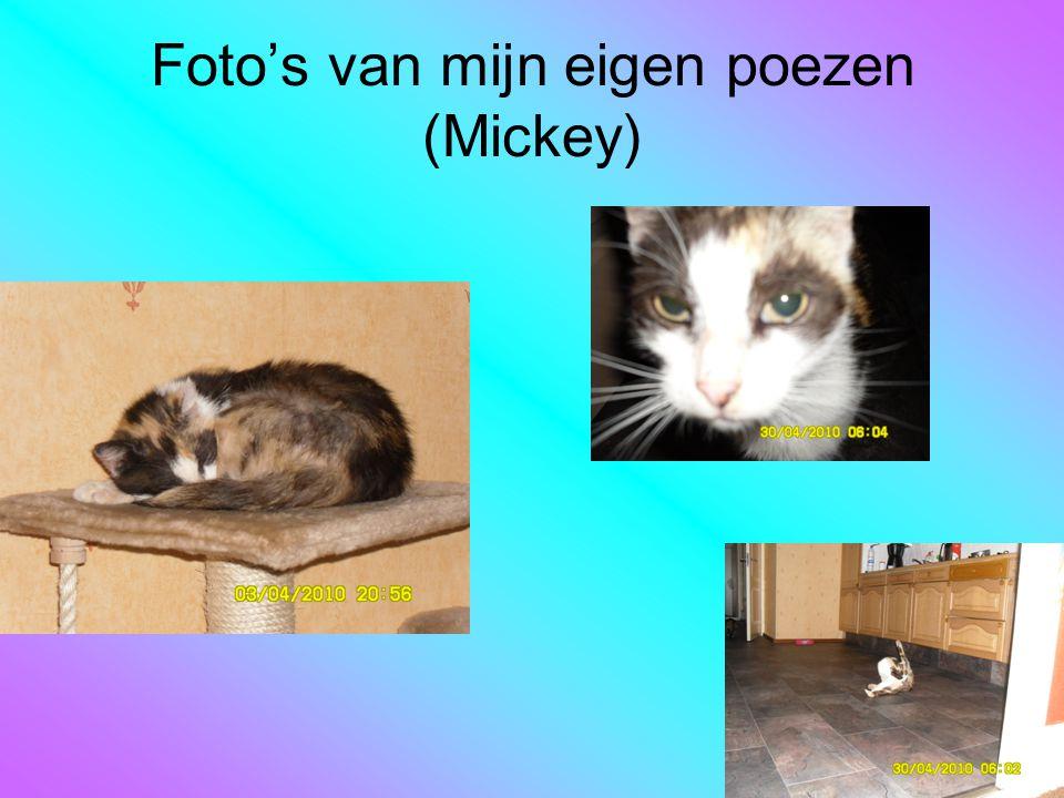 Foto's van mijn eigen poezen (Mickey)
