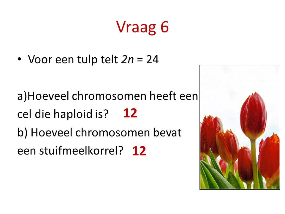 Vraag 6 12 12 Voor een tulp telt 2n = 24