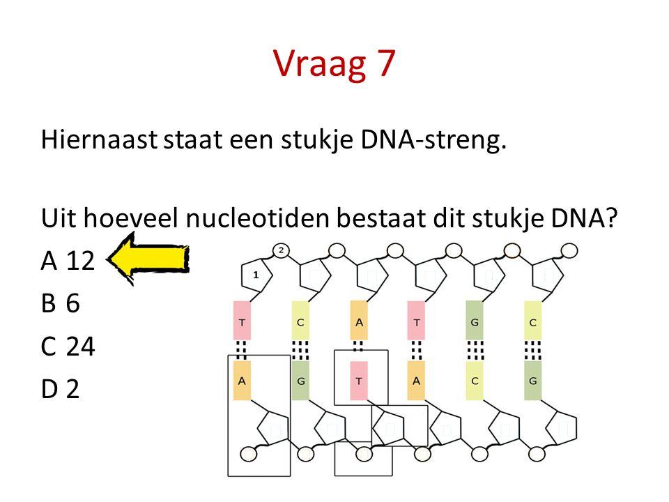 Vraag 7 Hiernaast staat een stukje DNA-streng. Uit hoeveel nucleotiden bestaat dit stukje DNA.