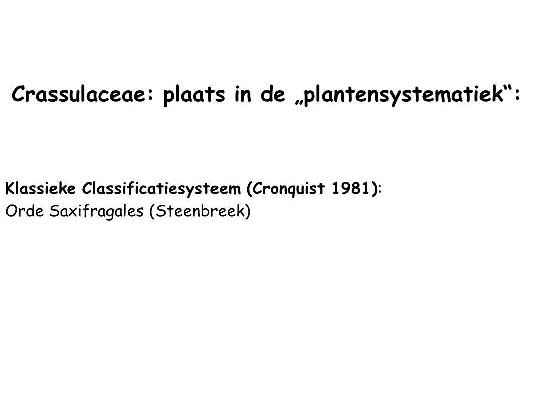 """Crassulaceae: plaats in de """"plantensystematiek :"""
