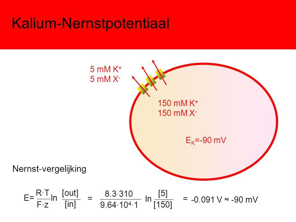Kalium-Nernstpotentiaal