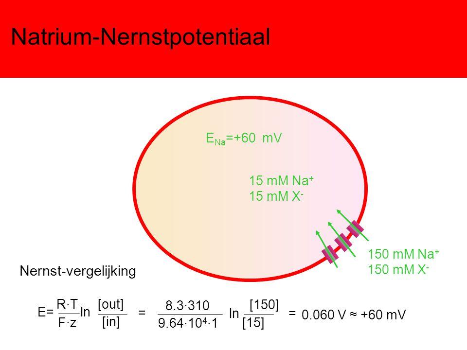 Natrium-Nernstpotentiaal
