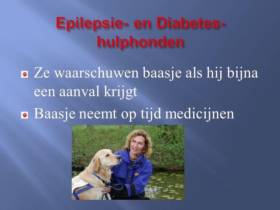 Epilepsie- en Diabetes- hulphonden