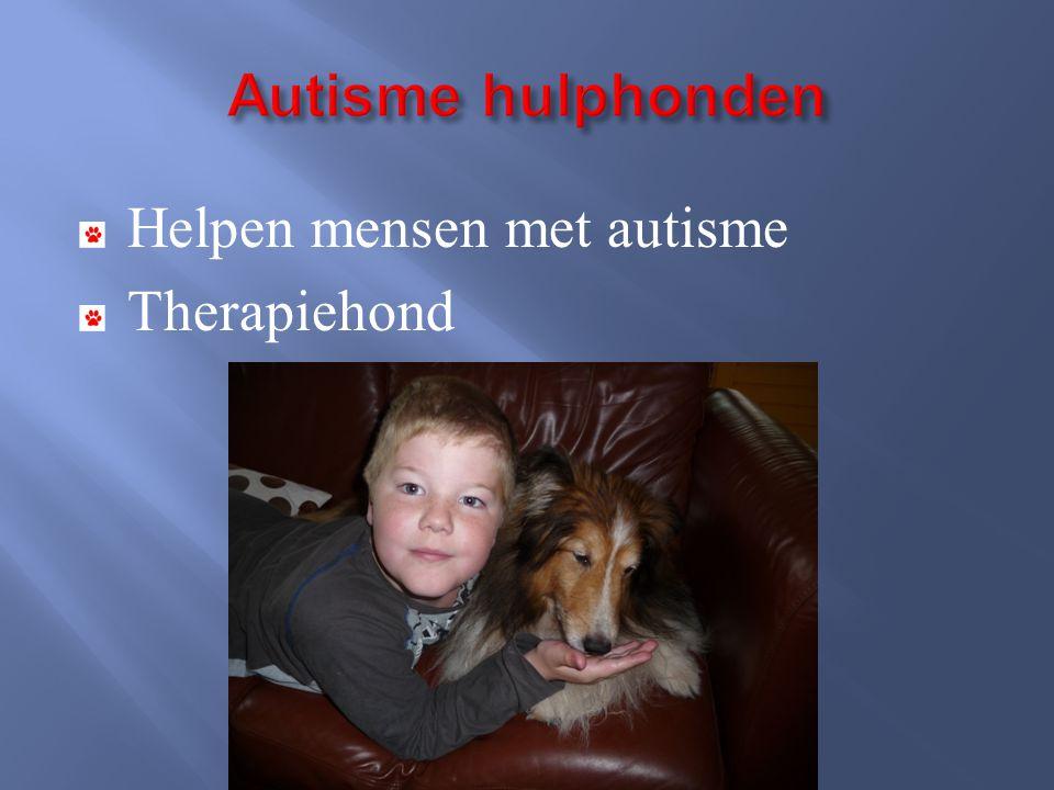 Autisme hulphonden Helpen mensen met autisme Therapiehond