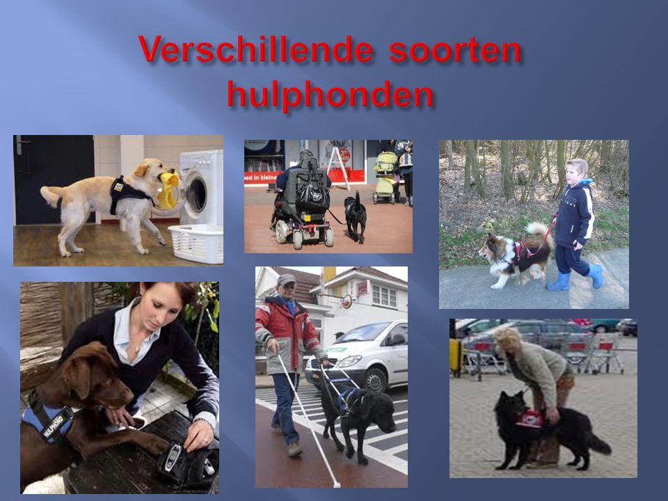 Verschillende soorten hulphonden