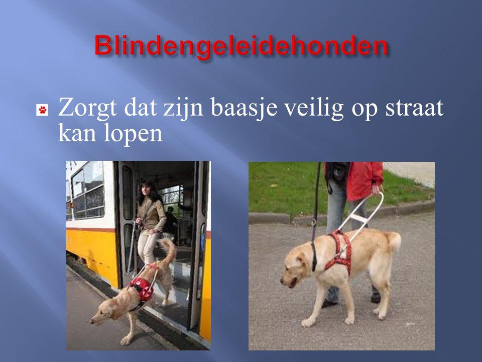 Blindengeleidehonden