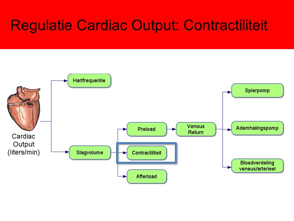 Regulatie Cardiac Output: Contractiliteit
