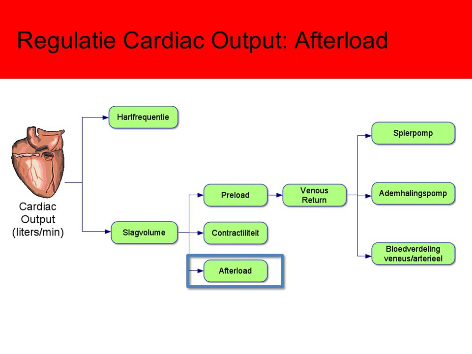 Regulatie Cardiac Output: Afterload