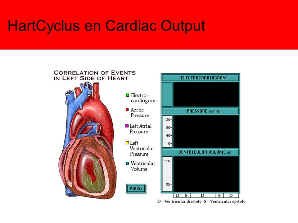 HartCyclus en Cardiac Output