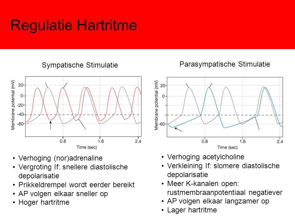Regulatie Hartritme Parasympatische Stimulatie Sympatische Stimulatie