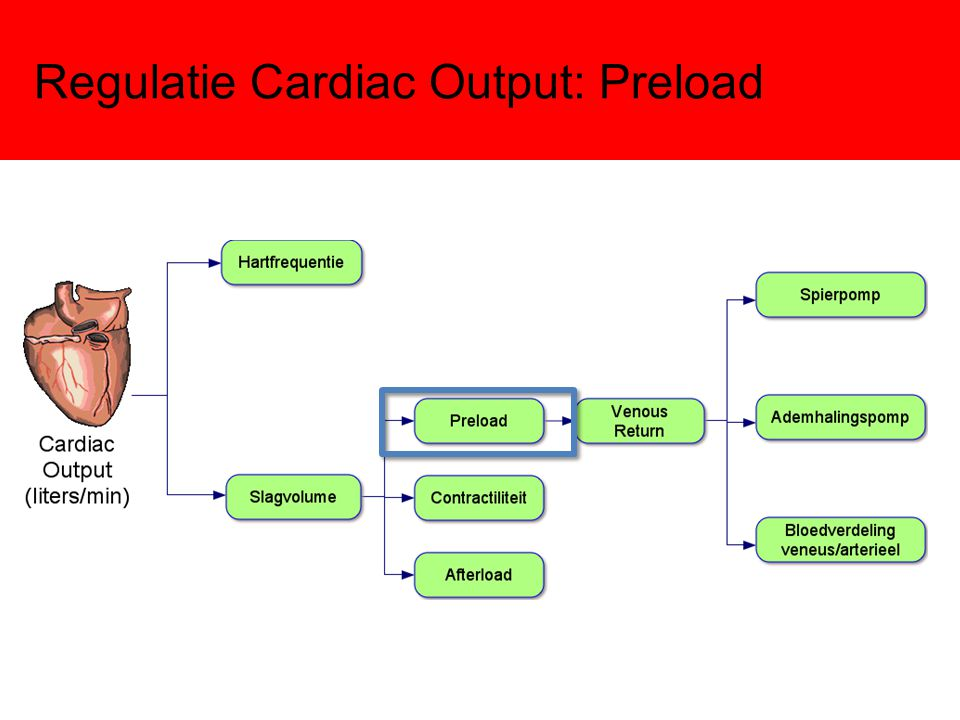Regulatie Cardiac Output: Preload
