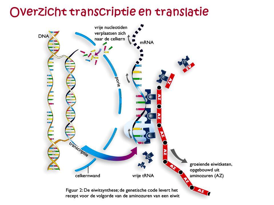 Overzicht transcriptie en translatie