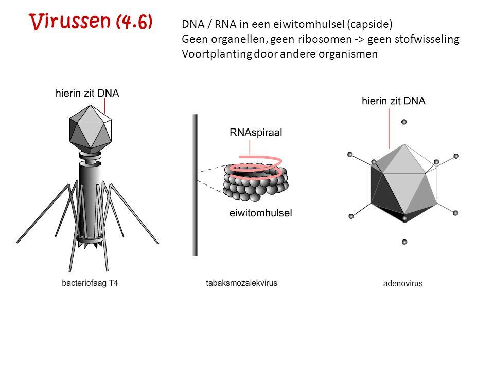 Virussen (4.6) DNA / RNA in een eiwitomhulsel (capside)