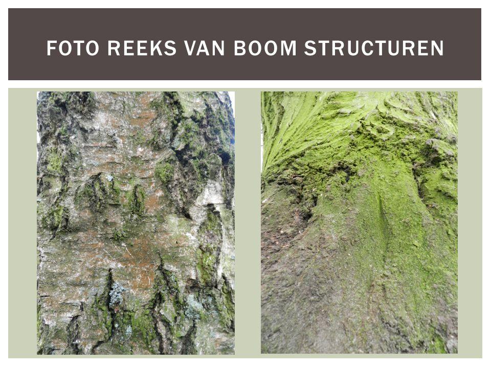 Foto reeks van Boom structuren