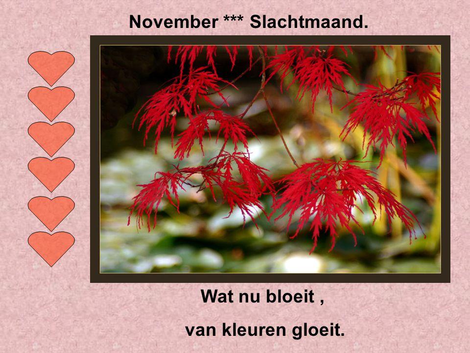 November *** Slachtmaand.