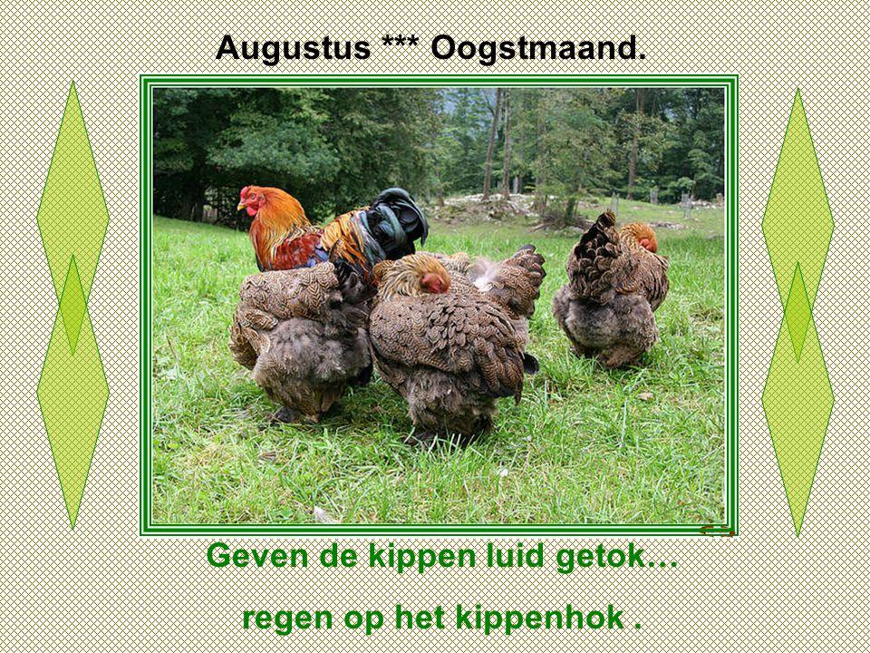 Augustus *** Oogstmaand. Geven de kippen luid getok…