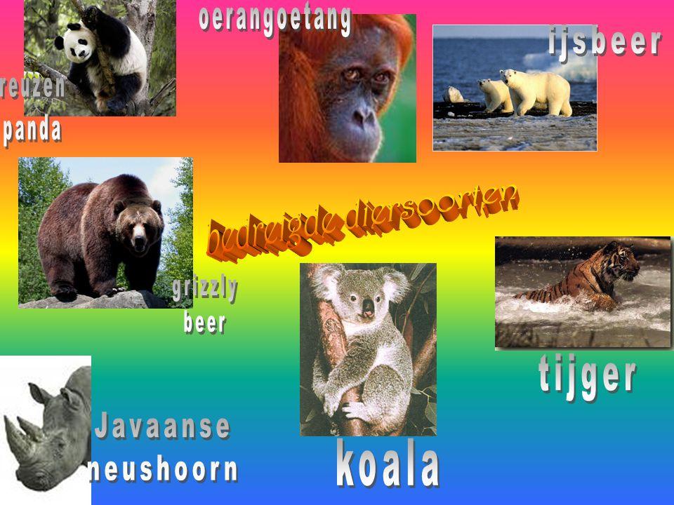 bedreigde diersoorten
