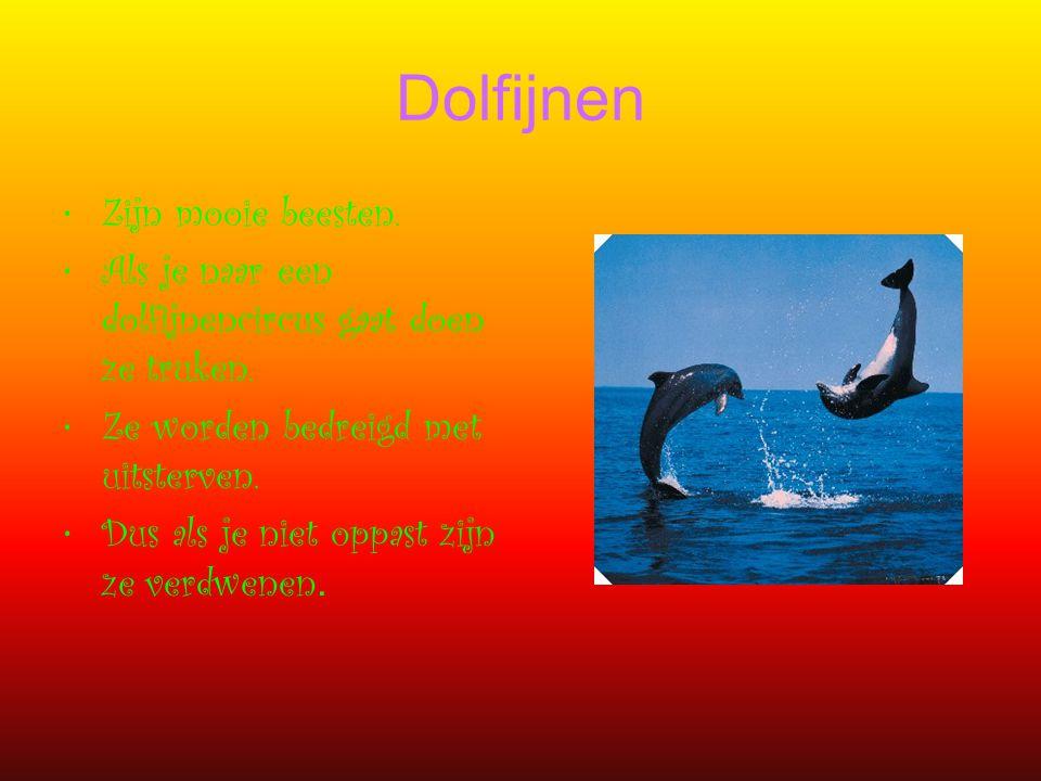 Dolfijnen Zijn mooie beesten.