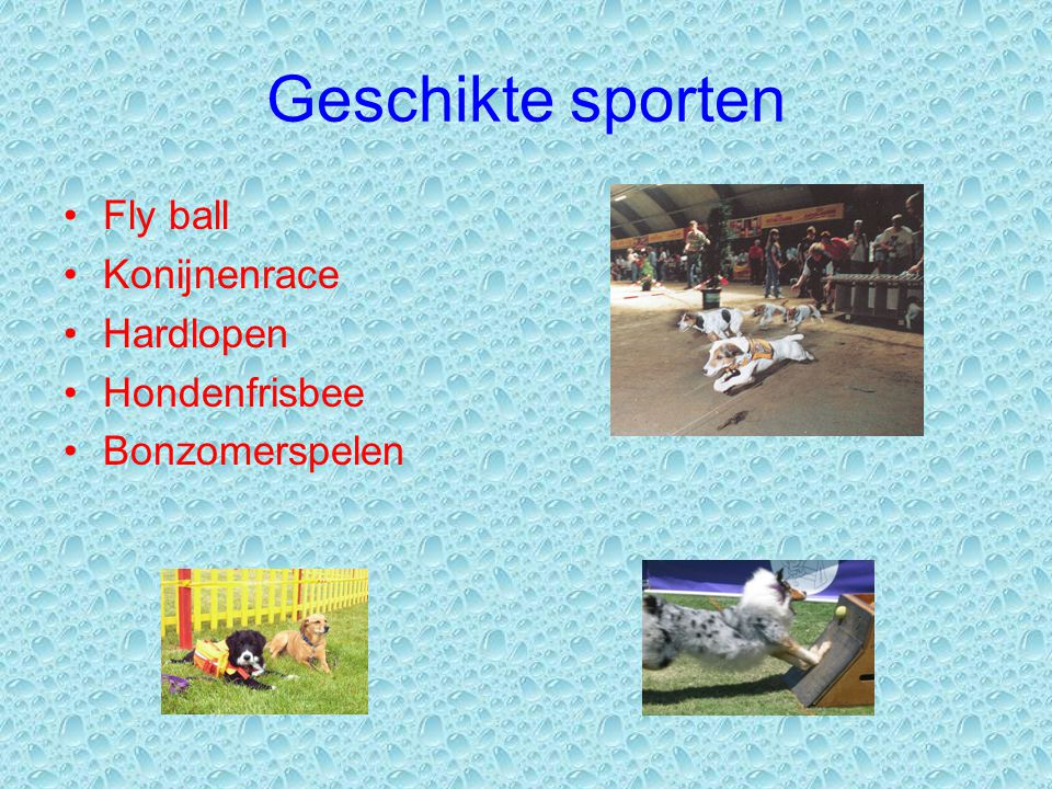 Geschikte sporten Fly ball Konijnenrace Hardlopen Hondenfrisbee