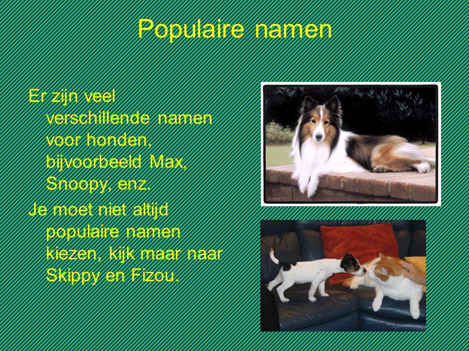 Populaire namen Er zijn veel verschillende namen voor honden, bijvoorbeeld Max, Snoopy, enz.