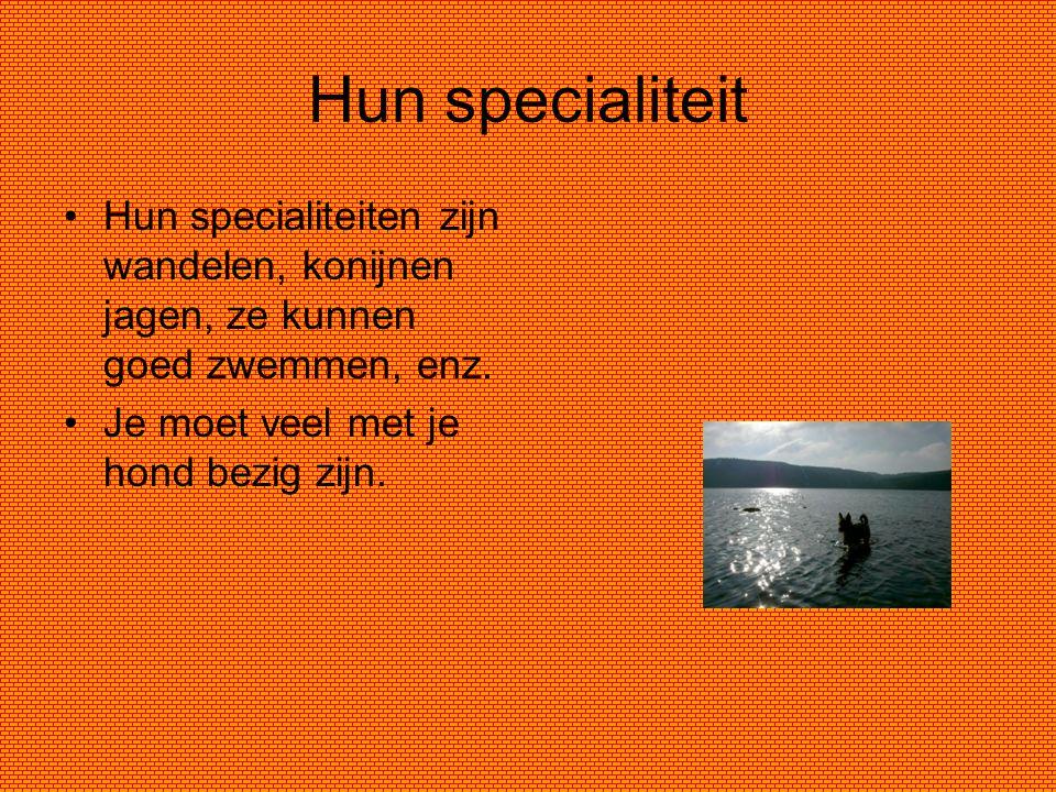 Hun specialiteit Hun specialiteiten zijn wandelen, konijnen jagen, ze kunnen goed zwemmen, enz.