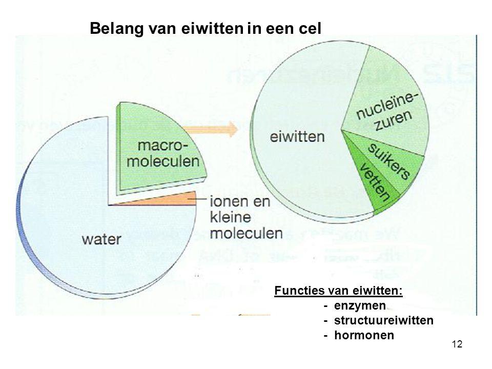 Belang van eiwitten in een cel