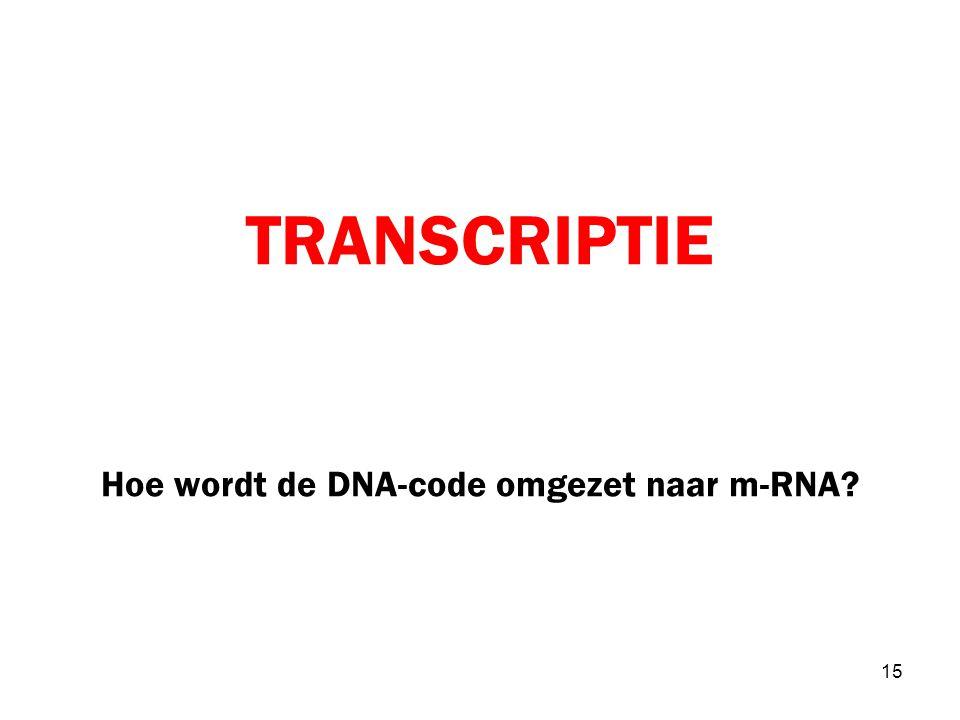 TRANSCRIPTIE Hoe wordt de DNA-code omgezet naar m-RNA
