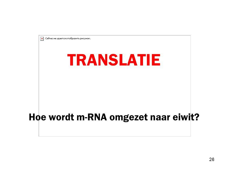 TRANSLATIE Hoe wordt m-RNA omgezet naar eiwit