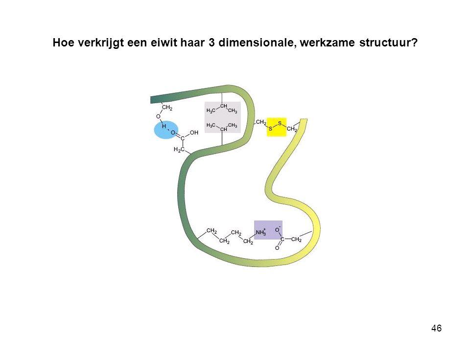 Hoe verkrijgt een eiwit haar 3 dimensionale, werkzame structuur