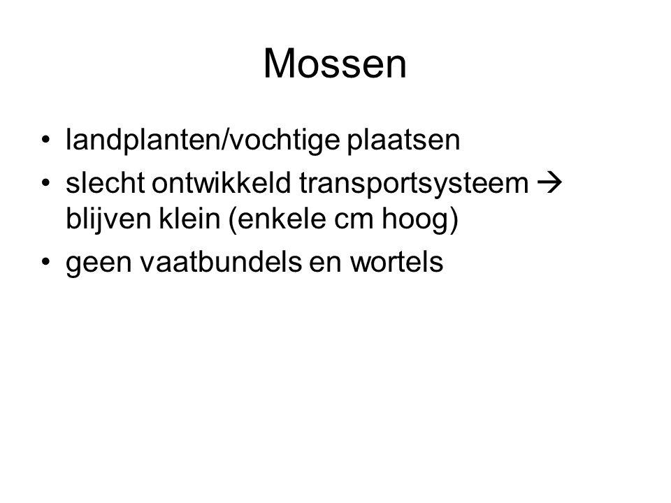 Mossen landplanten/vochtige plaatsen