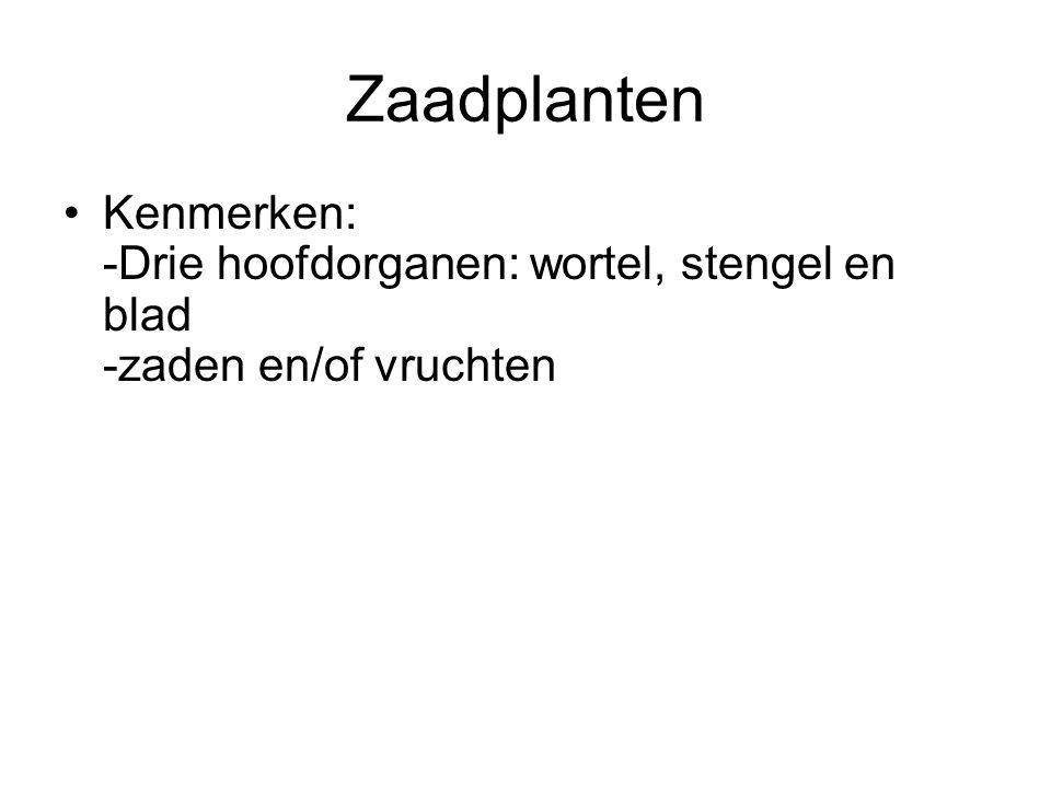 Zaadplanten Kenmerken: -Drie hoofdorganen: wortel, stengel en blad -zaden en/of vruchten. Hoofdorganen: