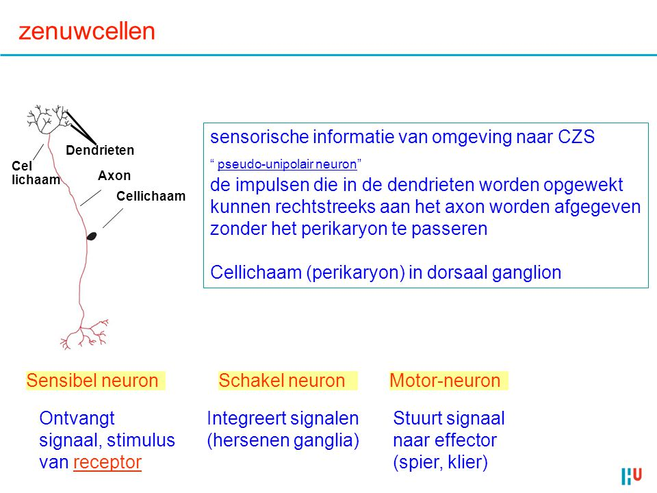 zenuwcellen sensorische informatie van omgeving naar CZS