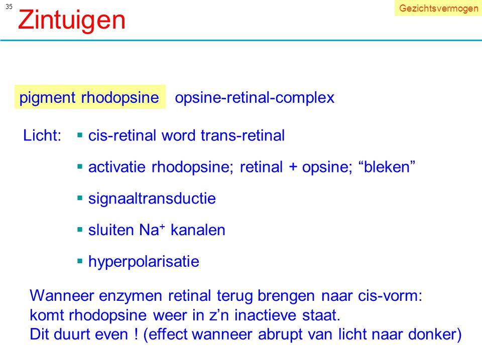 Zintuigen pigment rhodopsine opsine-retinal-complex Licht: