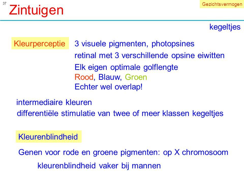 Zintuigen kegeltjes Kleurperceptie 3 visuele pigmenten, photopsines
