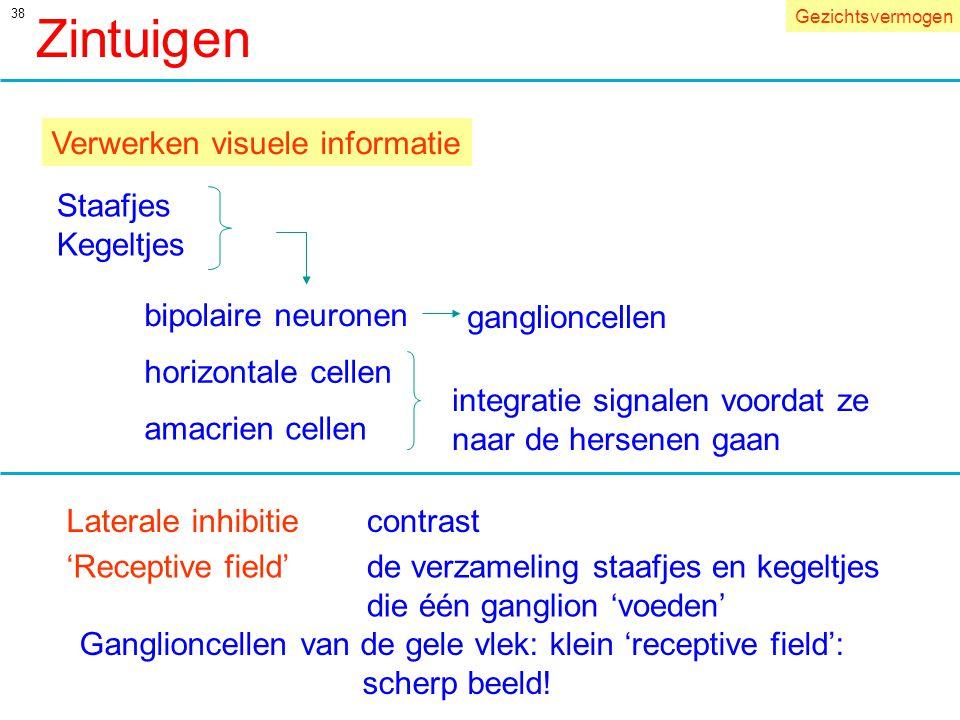 Zintuigen Verwerken visuele informatie Staafjes Kegeltjes