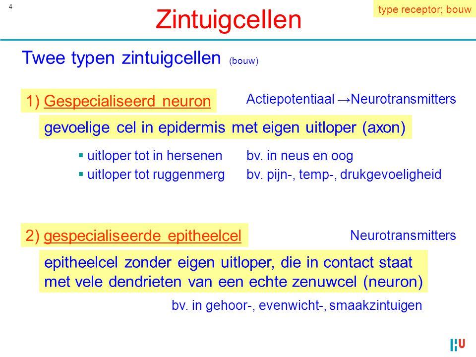 Zintuigcellen Twee typen zintuigcellen (bouw)