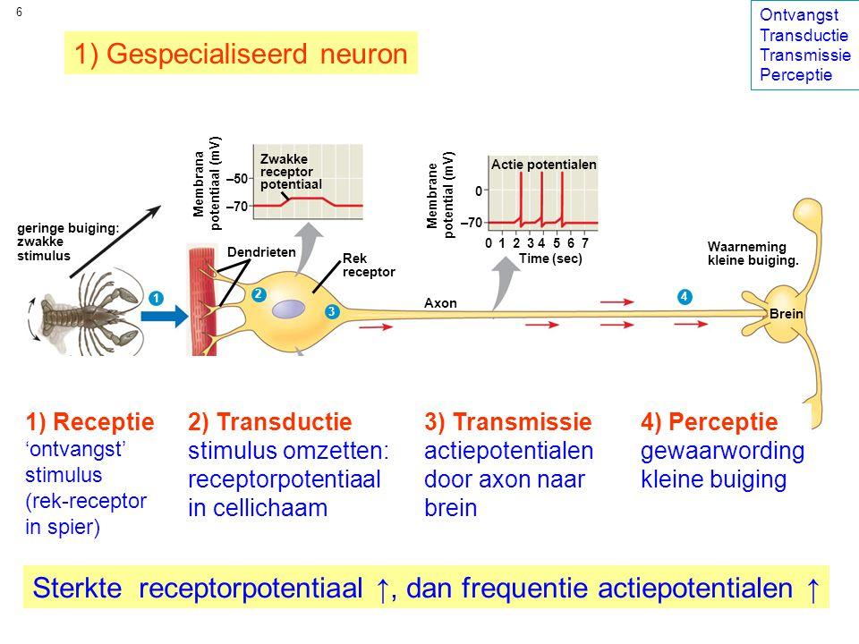 1) Gespecialiseerd neuron