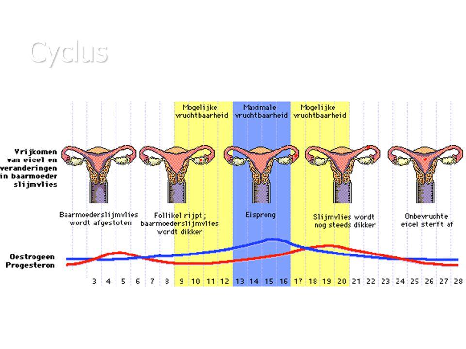 te kort aan oestrogeen