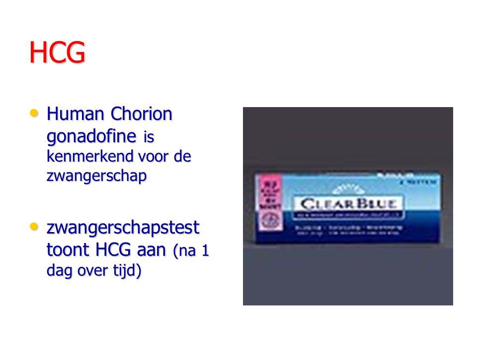 HCG Human Chorion gonadofine is kenmerkend voor de zwangerschap