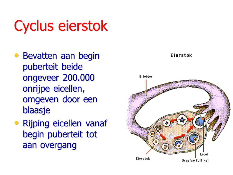 Cyclus eierstok Bevatten aan begin puberteit beide ongeveer 200.000 onrijpe eicellen, omgeven door een blaasje.