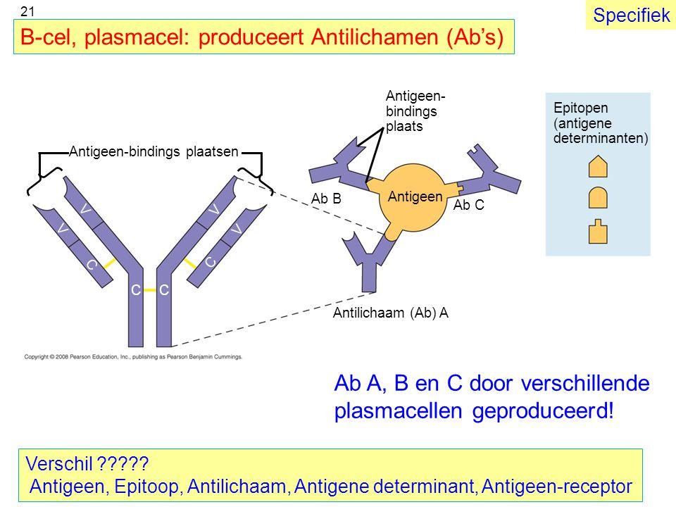 B-cel, plasmacel: produceert Antilichamen (Ab's)